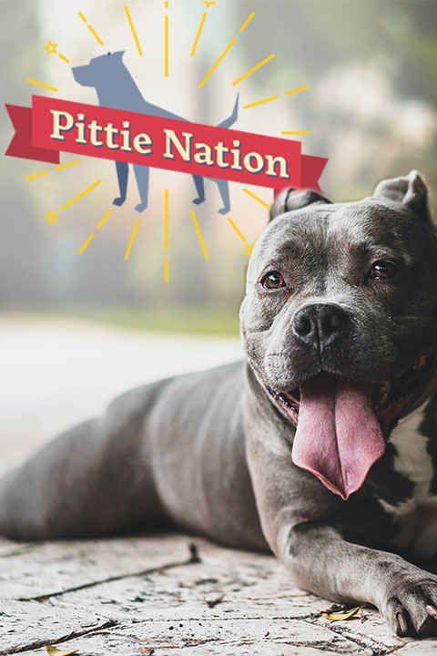 Pittie Nation An Original Video Series By Pitties Goofy Dog
