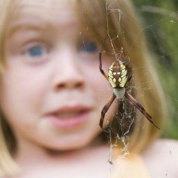 5 trucos para evitar picaduras de araña en los niños.