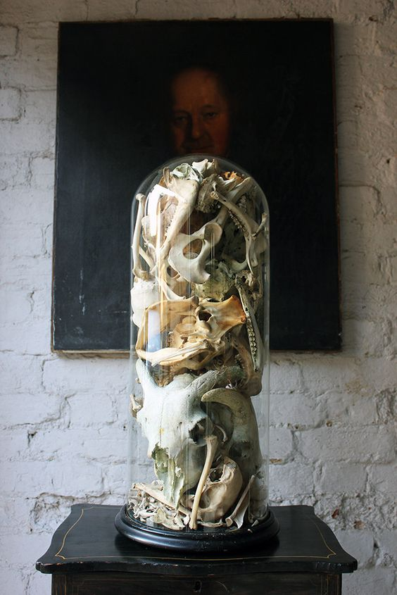 Antique Unique Skull & Skeletal Fragment Sculpture in a Victorian Glass Dome in Collectables, Animals, Taxidermy   eBay
