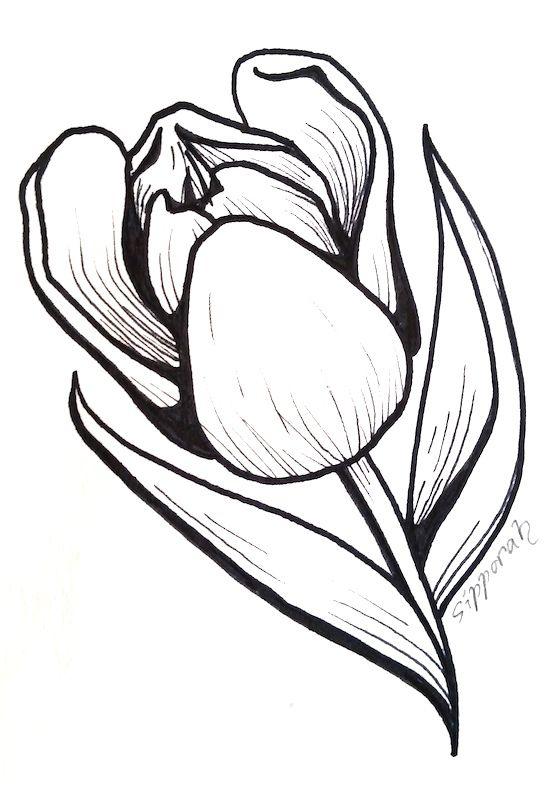Tulip Marker Drawing I Marker Drawing Illustration Art Tulip Drawing