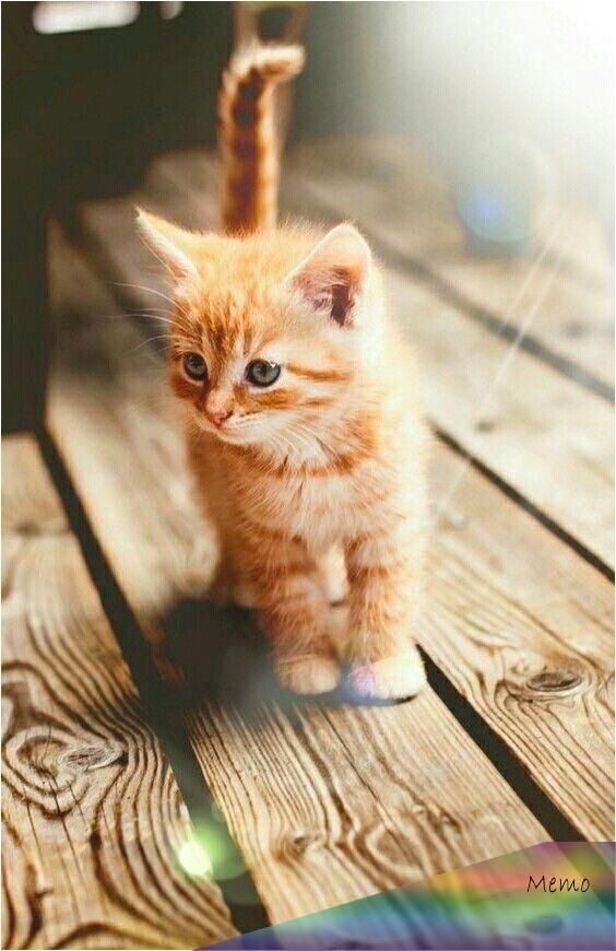 Nov 10 2019 Cats Facts Cats Breeds Breeds Behavior Healthy Cats Cats Catskates Cat Names Cats Meowing Ca Baby Katzen Susse Tiere Niedliche Tierbabys