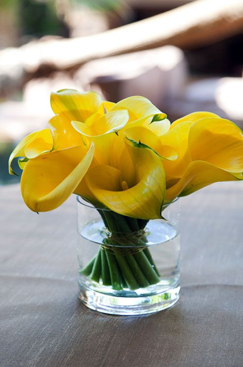 For a modern centerpiece arrange yellow calla lilies in