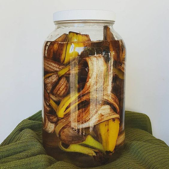 Making banana tea is a great natural fertilizer for any plants. Simply soak the banana peels in filtered water for 3 days to a week, then pour the liquid around your plants and afterwards throw the peels in your compost bin!: