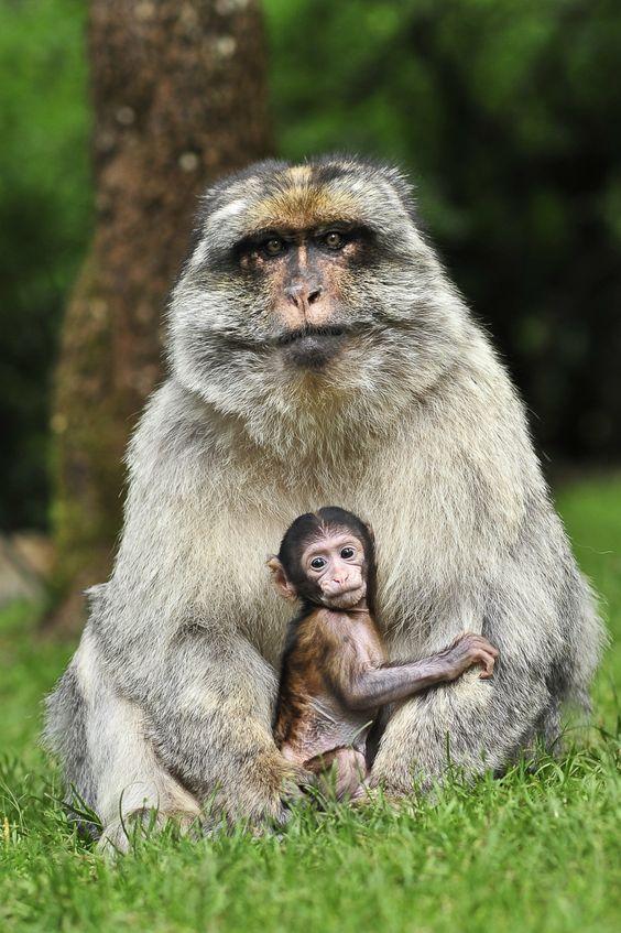 La forêt des singes à Rocamadour : http://www.france3.fr/emissions/midi-en-france/chroniques/la-foret-des-singes-avec-xavier-costes-albi_472113