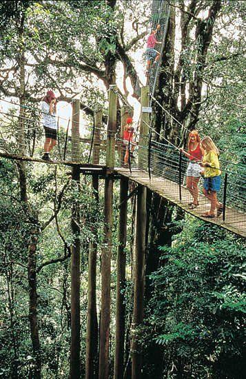 Tree Top Walk, O'Reilly's & Lamington National Park Brisbane Qld. Australia