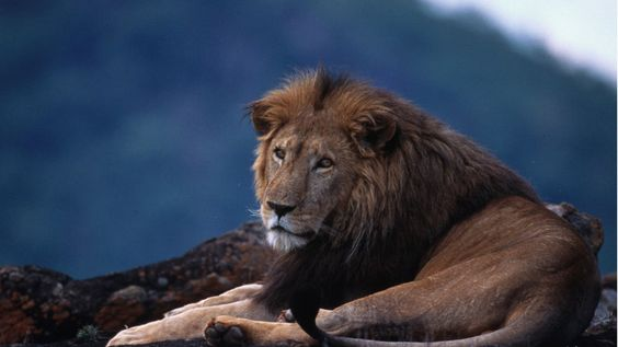 Petition · Put an end to the cruel hunting trophy· Change.org