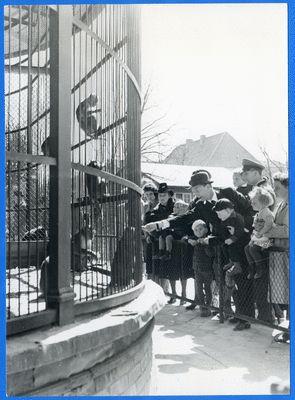 Königsberg (Pr.), Tiergarten, Besucher am Affenkäfig