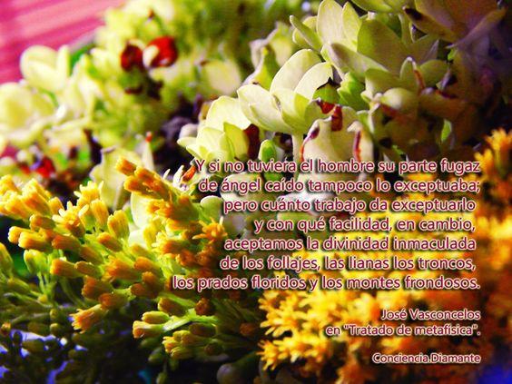 """""""Y si no tuviera el hombre su parte fugaz de ángel caído tampoco lo exceptuaba; pero cuánto trabajo da exceptuarlo y con qué facilidad, en cambio, aceptamos la divinidad inmaculada de los follajes, las lianas los troncos, los prados floridos y los montes frondosos"""".   José Vasconcelos  en """"Tratado de metafísica"""".  https://www.facebook.com/Conciencia.Diamante"""