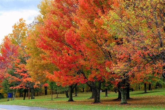 Fall Foliage Pictures at WomansDay.com - Fall Leaves Photos