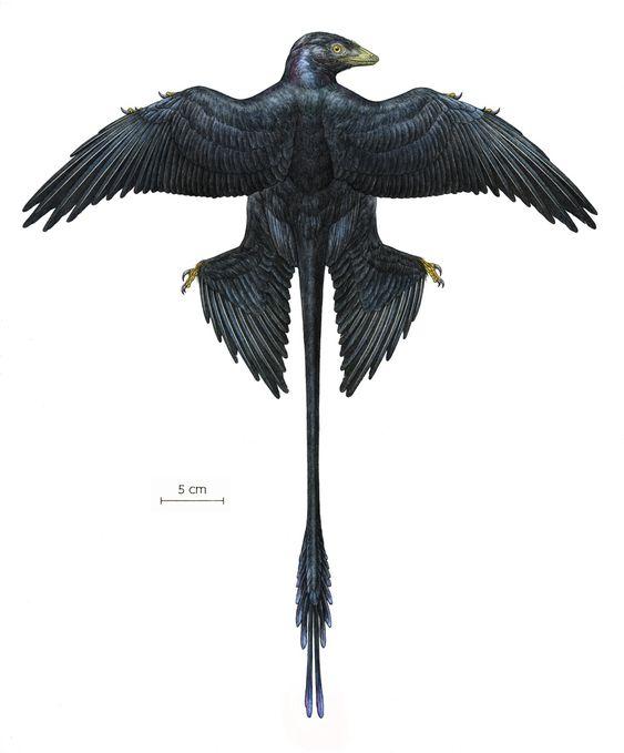 Microraptor Mick Ellison