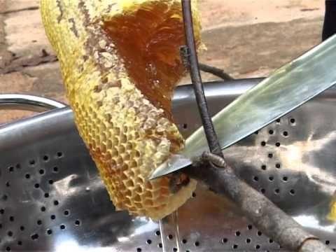 คนผึ้งป่า - YouTube
