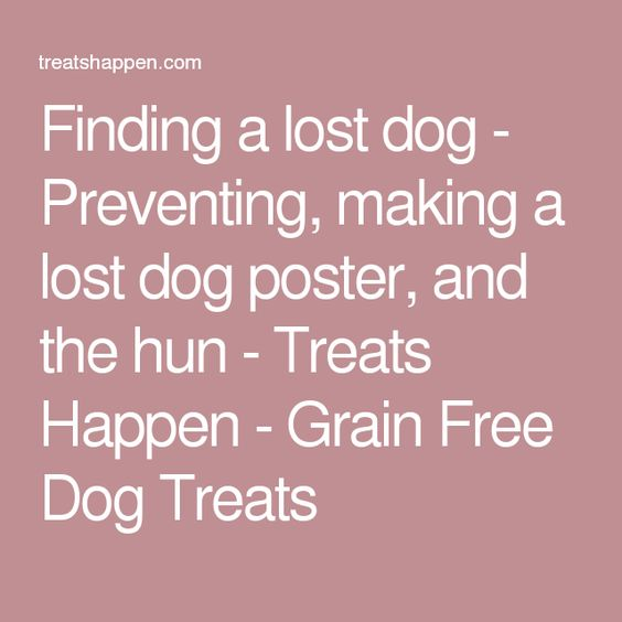 Finding a lost dog - Preventing, making a lost dog poster, and the - lost pet flyer maker