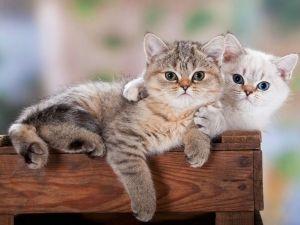Huggie Kittens; These Two Look so Sweet!: