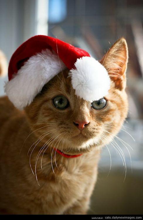 Santa kitty: