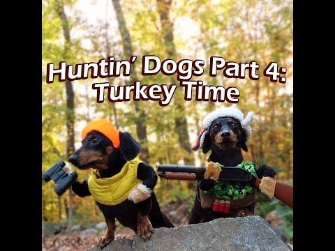 I Mz A Huntin Dog Crusoe Celebrity Dachshund Youtube