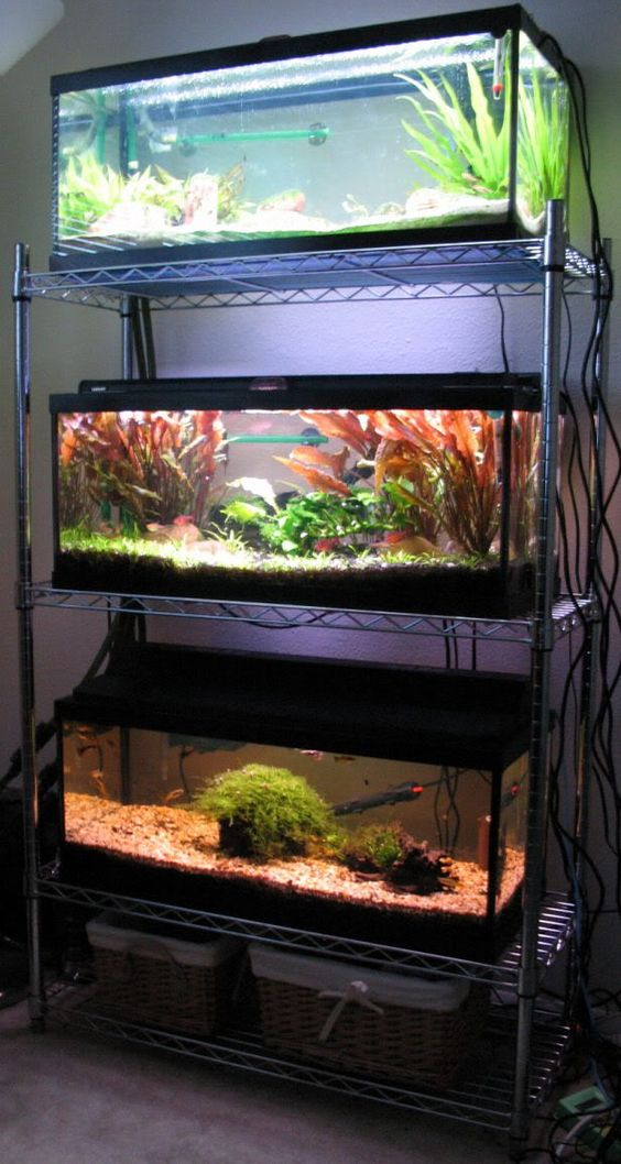 Tanks shelves and small animals on pinterest for Cool small fish tanks