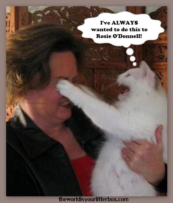 Cats and Rosie O'Donnell