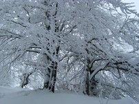 Ich wünsche euch einen wunderschönen 1. Advent
