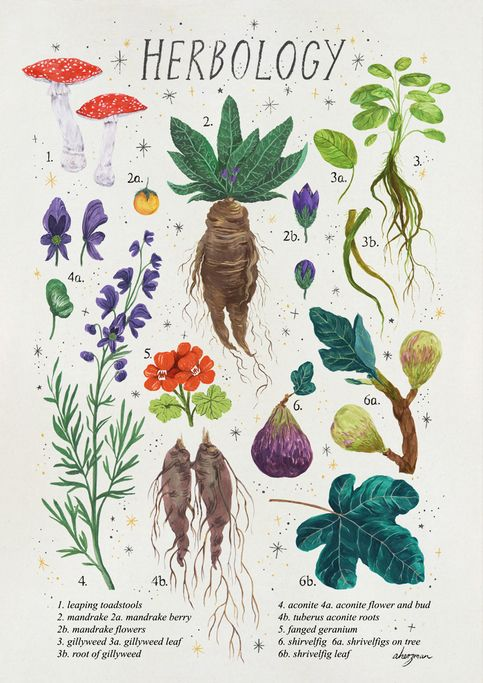 Magical Plants From Harry Potter Print Is 250gsm Matte A4 Size