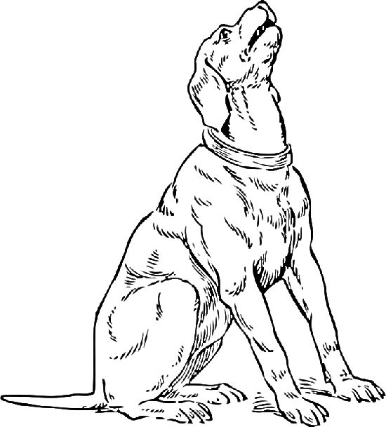 Animal Coloring Pages Coloring Pages And Coloring On