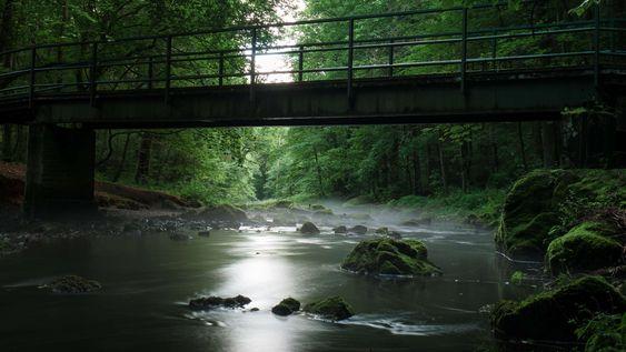 Ztracený most v lese 65d776b817ed5aabf29f09779cc0fc37