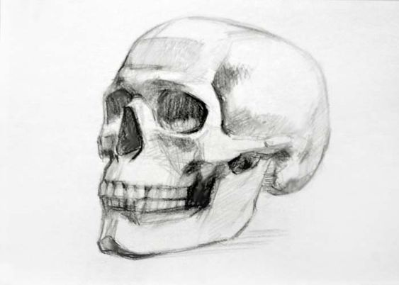 Skull drawing 3/4 view | Drawing ideas | Pinterest ...