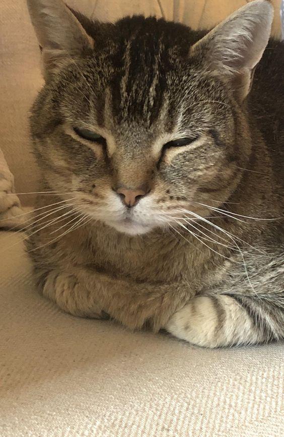 #Cats #Cat #Kittens #Kitten #Kitty #Pets #Pet #Meow #Moe #CuteCats #CuteCat #CuteKittens #CuteKitten #MeowMoe SleepyLoaf https://www.meowmoe.com/148963/