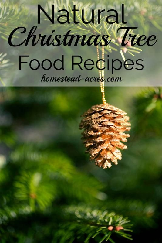 How To Make Your Own Christmas Tree Preservative Safe Non Toxic Christmas Tree Preservative Cool Christmas Trees Christmas Tree Food