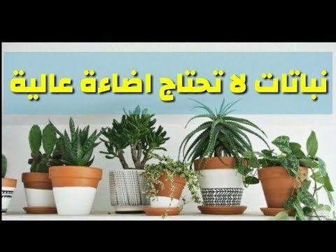 نباتات داخلية لا تحتاج إضاءة عالية داخل البيت Youtube Plants Garden Basic