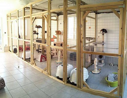 Pension Pour Chat Toulouse Cat Enclosure Cat Daycare Cat Kennel