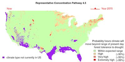 Model predicts how forests in the USA will respond to climate change