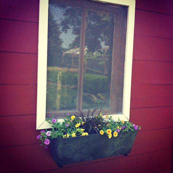 Shed window box 2012