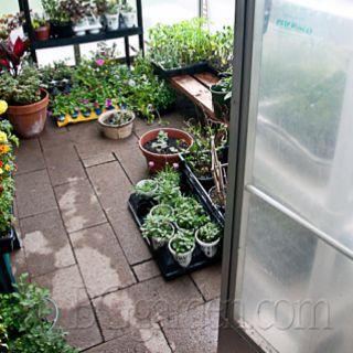 Bren's greenhouse @BG_Garden