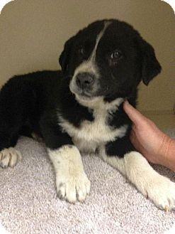 Rescue Dogs Carson City Nv