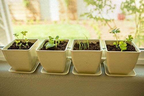 This Herb Garden Starter Kit Indoor Herb Garden Growing Kit
