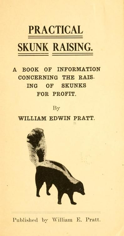 The Raising of Skunks for Profit