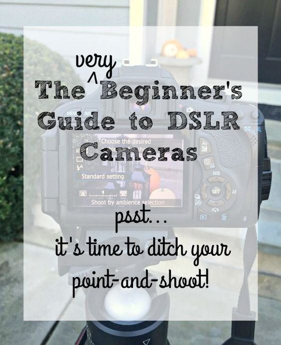 The perfect guide for beginner photographers who want to graduate from a point-and-shoot and need a few helpful tips!