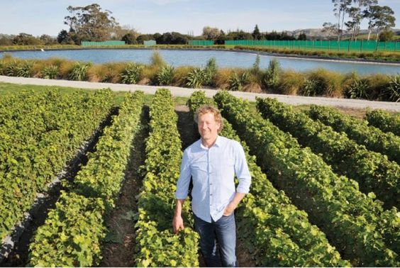 Geoff Thorpe honoured for contribution to wine industry | The Gisborne Herald