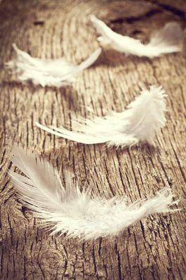 Wenn du eine weiße Feder siehst,befindet sich ein Engel bei dir