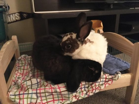 After almost a year of work Clover and Phil are finally bonded! http://ift.tt/2fD7vZG