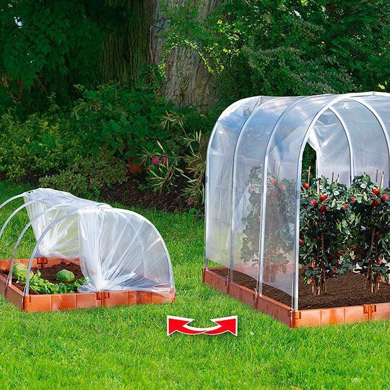 Juwel Tomatengewächshaus