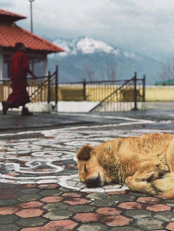 19 απίστευτες φωτογραφίες από ζωάκια που πεθάναμε στα γέλια