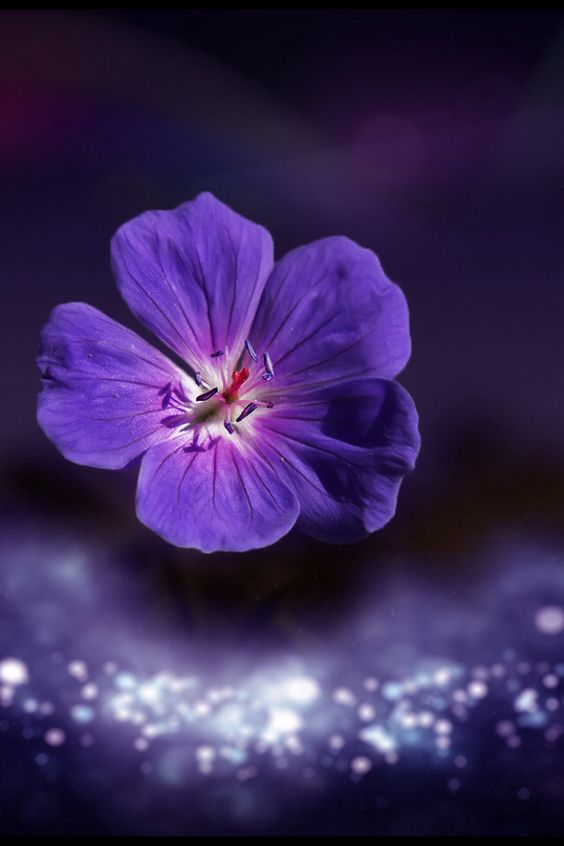 Purple Flower by Otto Hütter on 500px