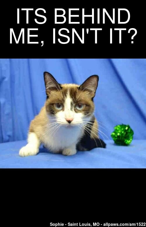 Create your own cute or funny pet meme from profile pictures of over 100,000 adoptable pets on AllPaws.com.