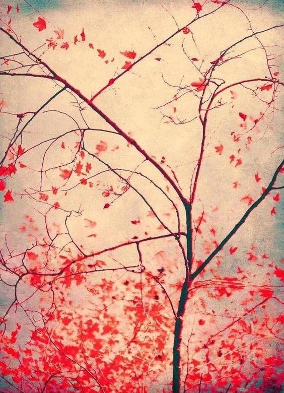 red october als Leinwandbild von Ingrid Beddoes | JUNIQE