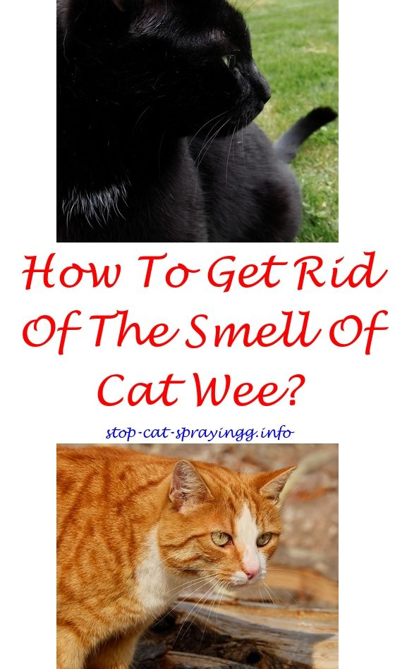 Cat Pee Smell Removal Basement Cat Repellant Cat Spray Cat Pee Smell