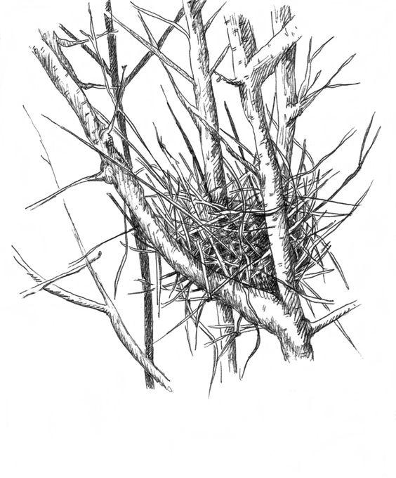 Nest in a Tree - 4/20/14 - esolomon