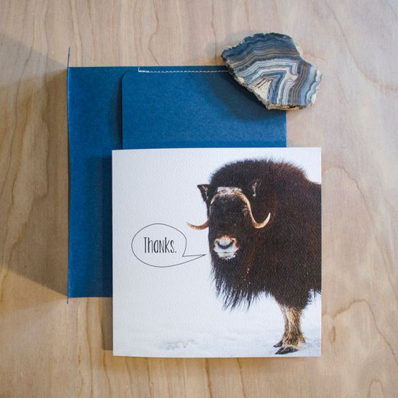 Silly Musk Ox 'Thank you' Card with Handmade Envelope, Square!