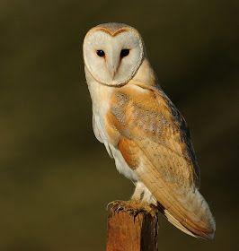 Brian Rafferty...Wildlife Photographer: Three Of A Kind