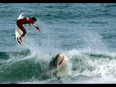 One of the Biggest Great Whites Ever Filmed | Jaws Strikes Back - YouTube